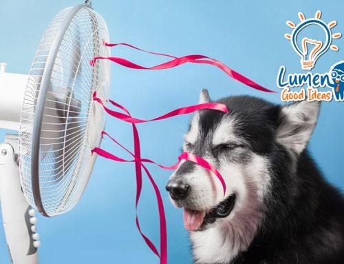 I migliori gadget tecnologici per sconfiggere il caldo
